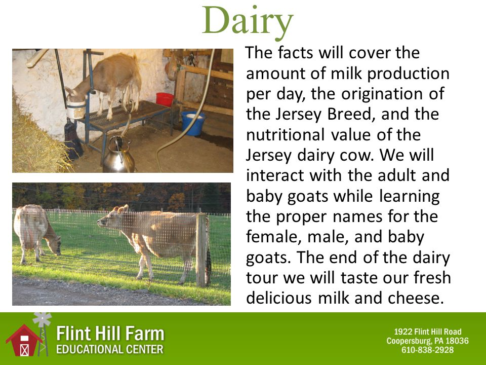 Dairy The facts will cover the amount of milk production per day, the origination of the Jersey Breed, and the nutritional value of the Jersey dairy cow.