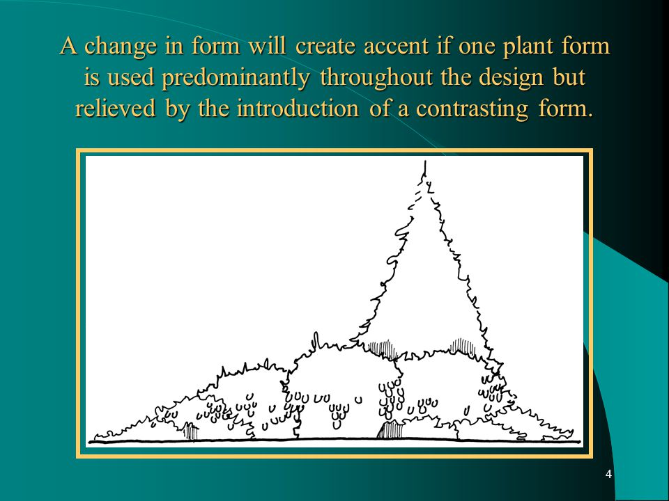 4 A change in form will create accent if one plant form is used predominantly throughout the design but relieved by the introduction of a contrasting form.
