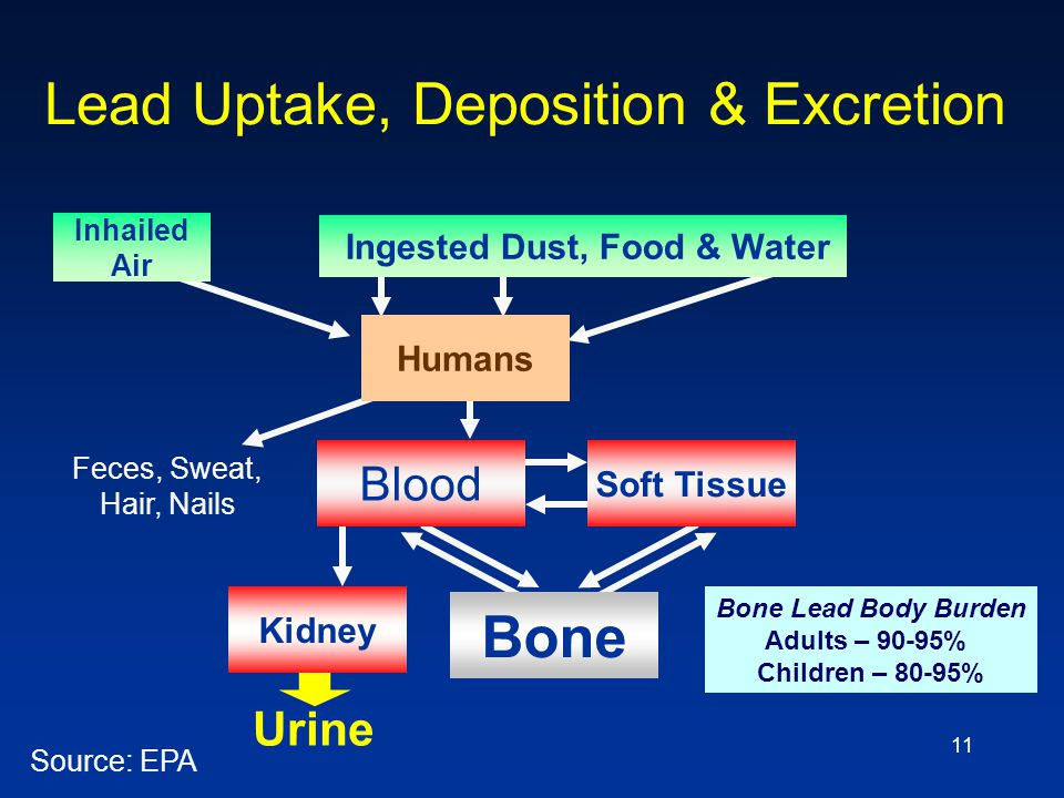 11 Lead Uptake, Deposition & Excretion Source: EPA Blood Bone Soft Tissue Kidney Urine Humans Inhailed Air Ingested Dust, Food & Water Feces, Sweat, H