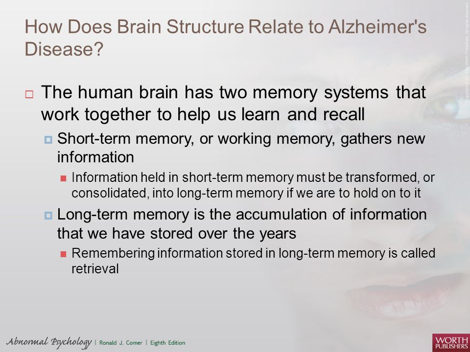How Does Brain Structure Relate to Alzheimer's Disease?  The human brain has two memory systems that work together to help us learn and recall  Shor