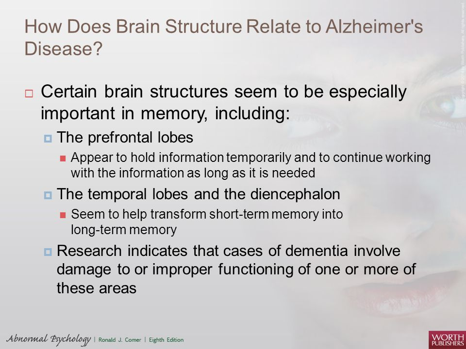 How Does Brain Structure Relate to Alzheimer's Disease?  Certain brain structures seem to be especially important in memory, including:  The prefron