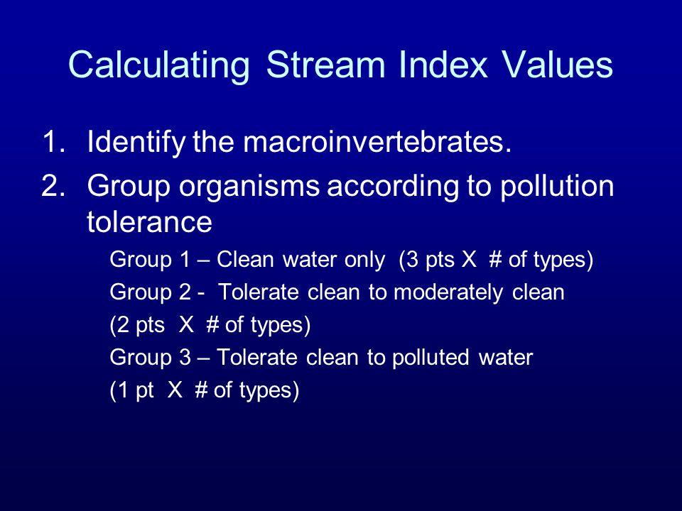 Calculating Stream Index Values 1.Identify the macroinvertebrates.
