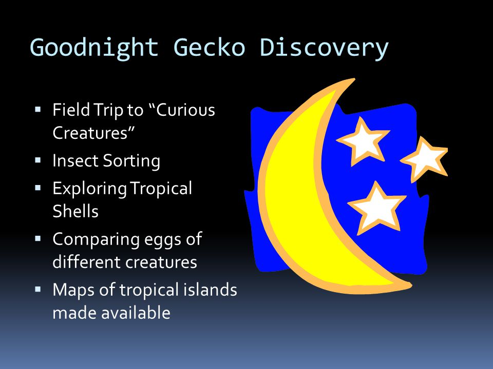 Goodnight Gecko Sand & Water  Sand  Shells  Geckos  Beach Toys  Eggs  Water  Tropical Fish  Fishing Poles  Tropical Water Plants  Shells