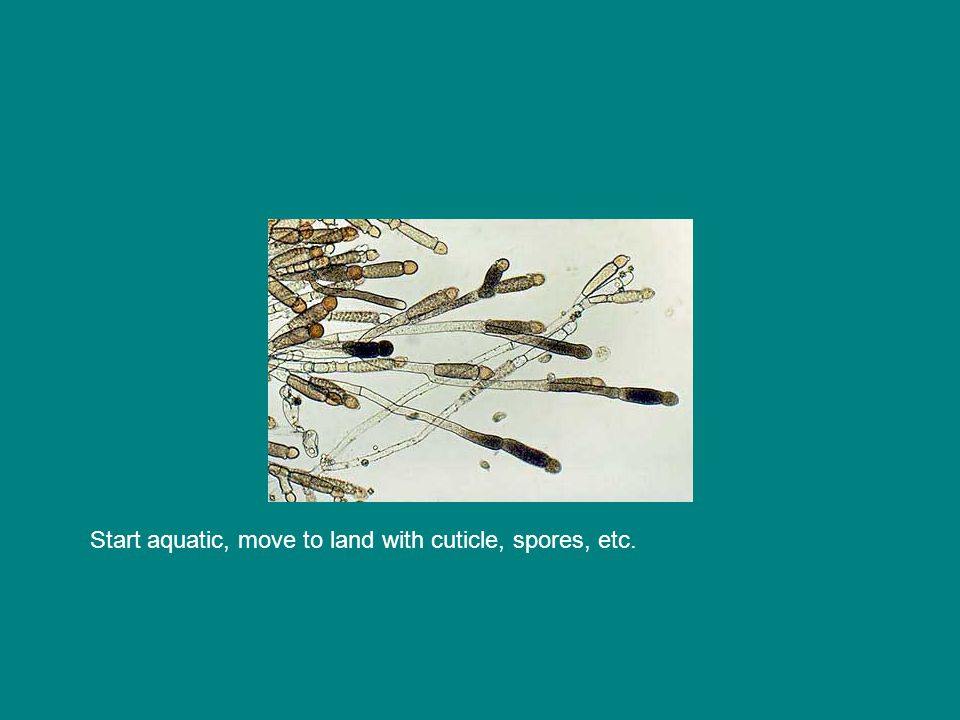 Start aquatic, move to land with cuticle, spores, etc.