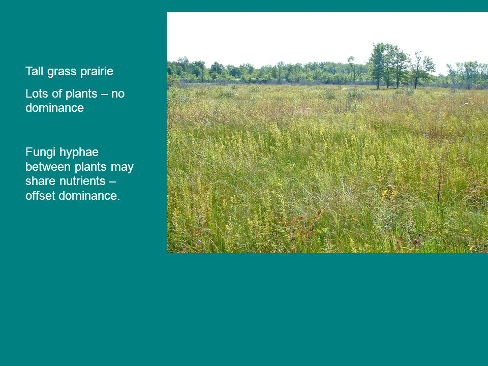 Tall grass prairie Lots of plants – no dominance Fungi hyphae between plants may share nutrients – offset dominance.
