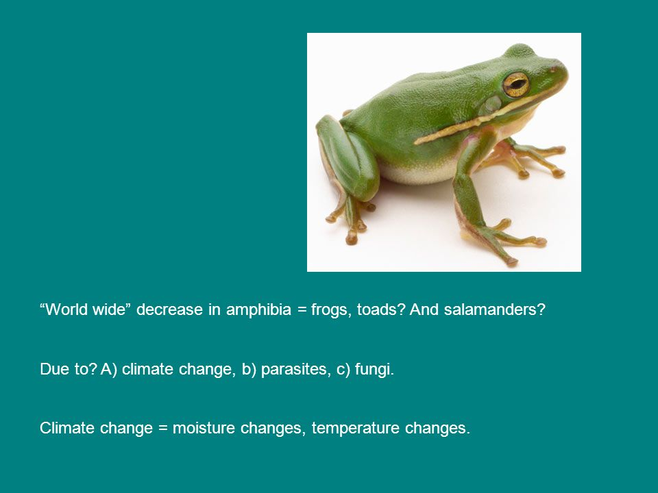 World wide decrease in amphibia = frogs, toads. And salamanders.