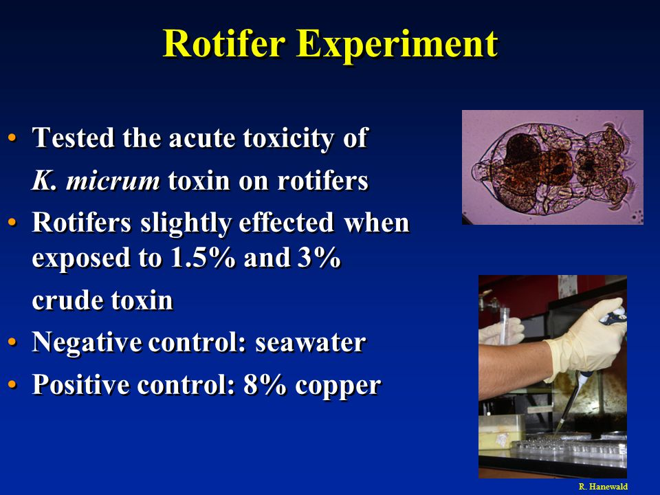 Rotifer Experiment Tested the acute toxicity of K.