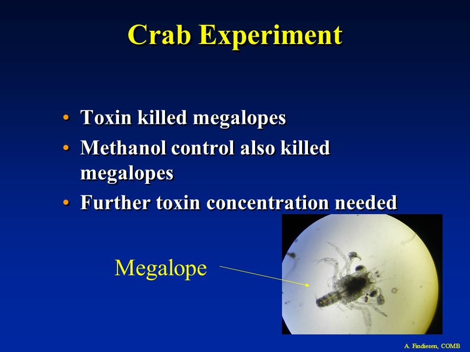 Megalope Crab Experiment Toxin killed megalopes Methanol control also killed megalopes Further toxin concentration needed Toxin killed megalopes Methanol control also killed megalopes Further toxin concentration needed A.