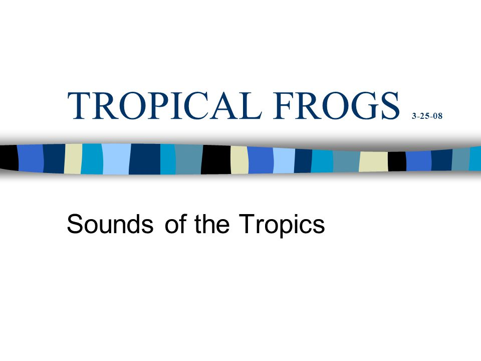 TROPICAL FROGS 3-25-08 Sounds of the Tropics