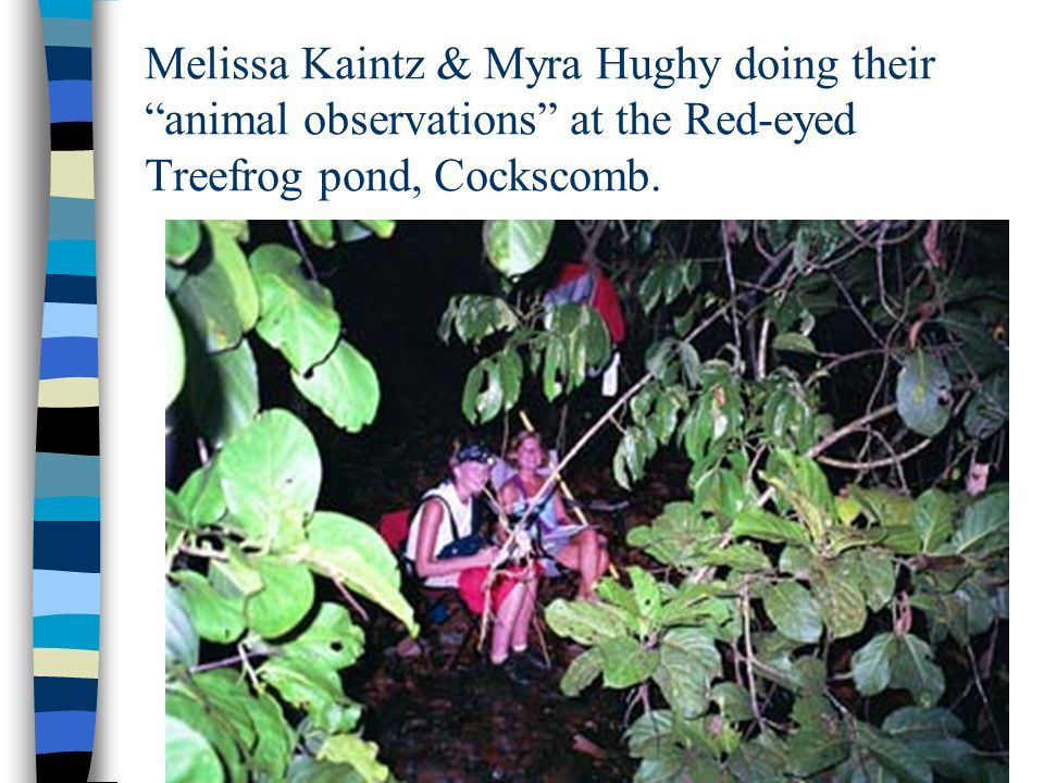 Melissa Kaintz & Myra Hughy doing their animal observations at the Red-eyed Treefrog pond, Cockscomb.