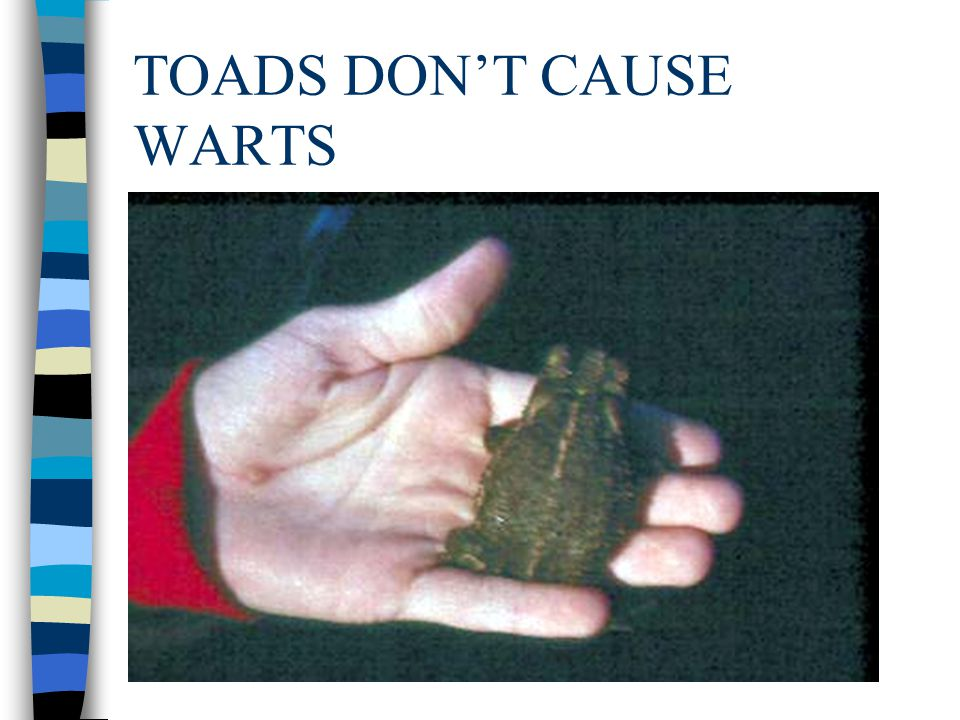TOADS DON'T CAUSE WARTS