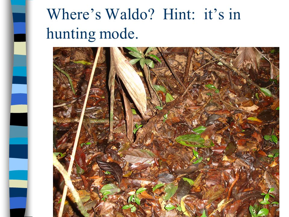 Where's Waldo Hint: it's in hunting mode.