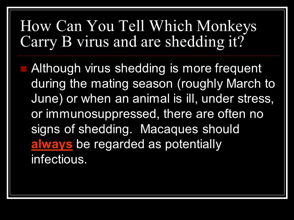 How Can You Tell Which Monkeys Carry B virus and are shedding it? Although virus shedding is more frequent during the mating season (roughly March to