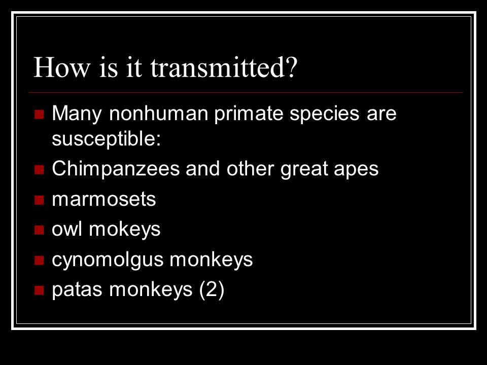 How is it transmitted? Many nonhuman primate species are susceptible: Chimpanzees and other great apes marmosets owl mokeys cynomolgus monkeys patas m