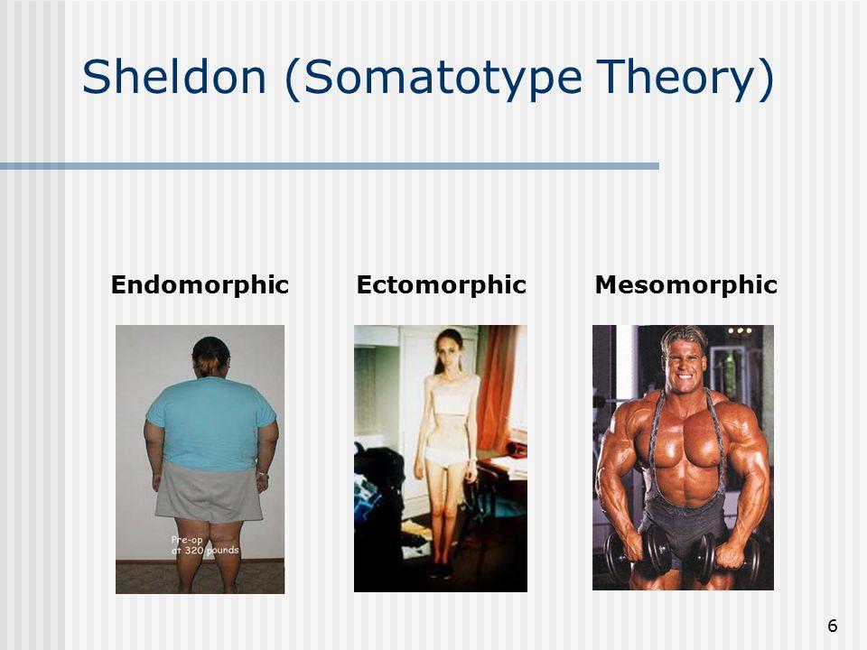 6 Sheldon (Somatotype Theory) EndomorphicEctomorphicMesomorphic
