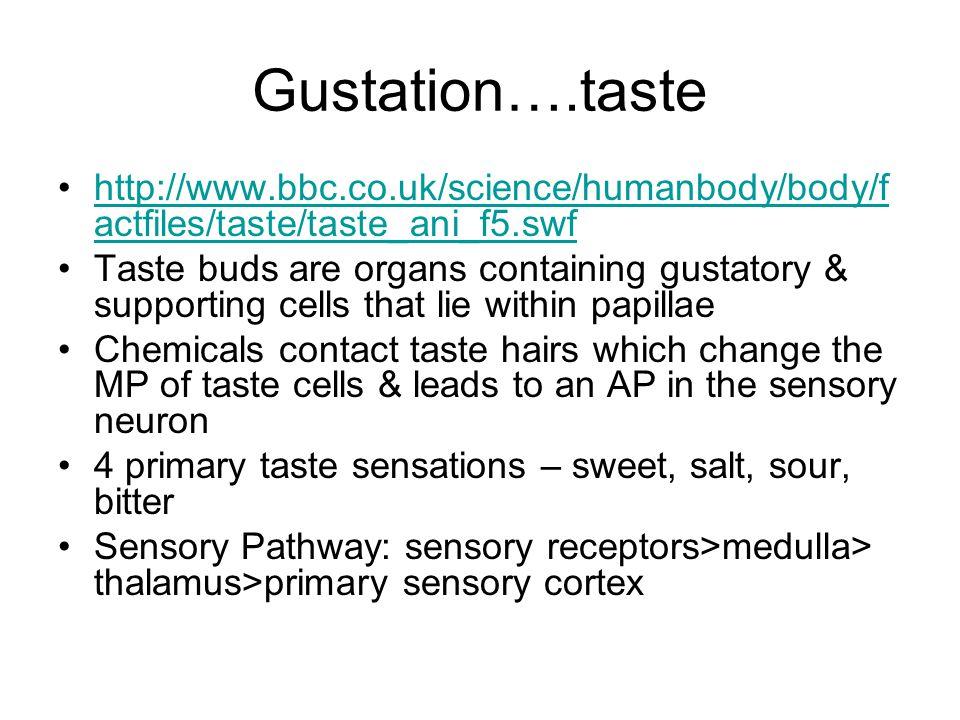 Gustation….taste http://www.bbc.co.uk/science/humanbody/body/f actfiles/taste/taste_ani_f5.swfhttp://www.bbc.co.uk/science/humanbody/body/f actfiles/t