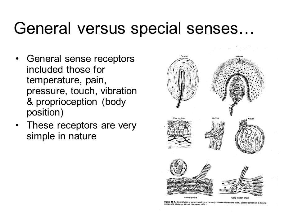 General versus special senses… General sense receptors included those for temperature, pain, pressure, touch, vibration & proprioception (body positio