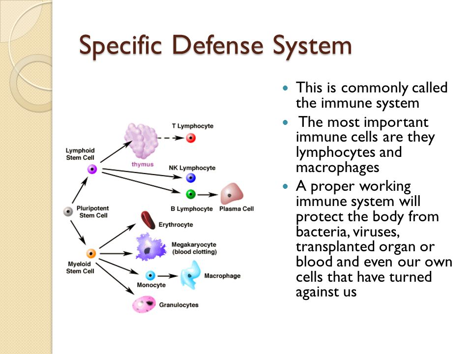 Specific Defense System This is commonly called the immune system The most important immune cells are they lymphocytes and macrophages A proper workin