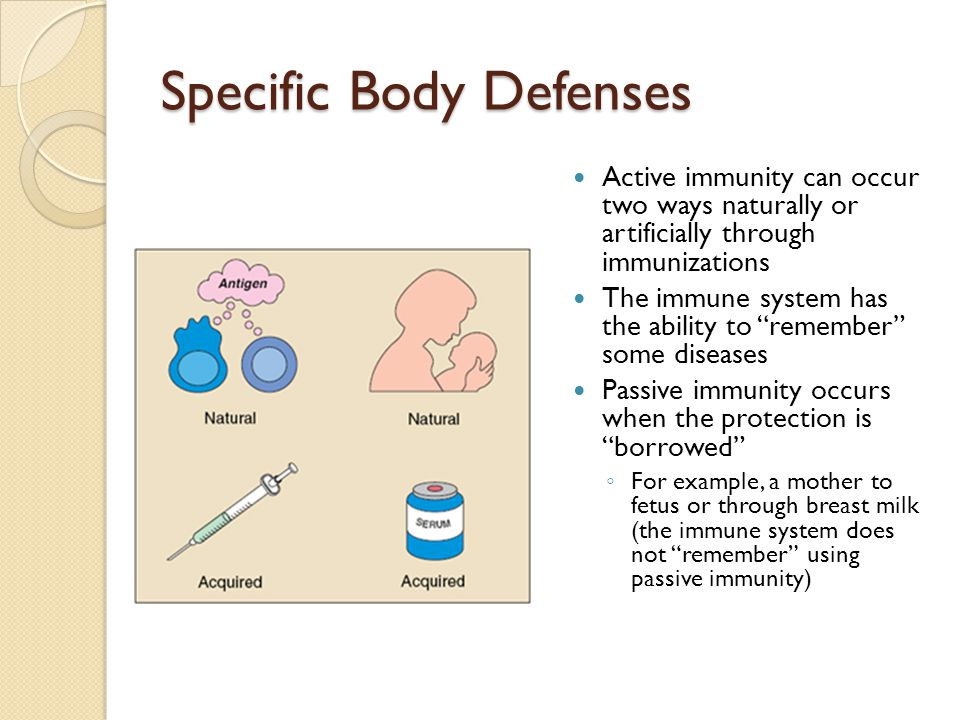 """Specific Body Defenses Active immunity can occur two ways naturally or artificially through immunizations The immune system has the ability to """"rememb"""