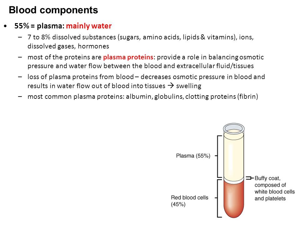 Blood components 55% = plasma: mainly water –7 to 8% dissolved substances (sugars, amino acids, lipids & vitamins), ions, dissolved gases, hormones –most of the proteins are plasma proteins: provide a role in balancing osmotic pressure and water flow between the blood and extracellular fluid/tissues –loss of plasma proteins from blood – decreases osmotic pressure in blood and results in water flow out of blood into tissues  swelling –most common plasma proteins: albumin, globulins, clotting proteins (fibrin)