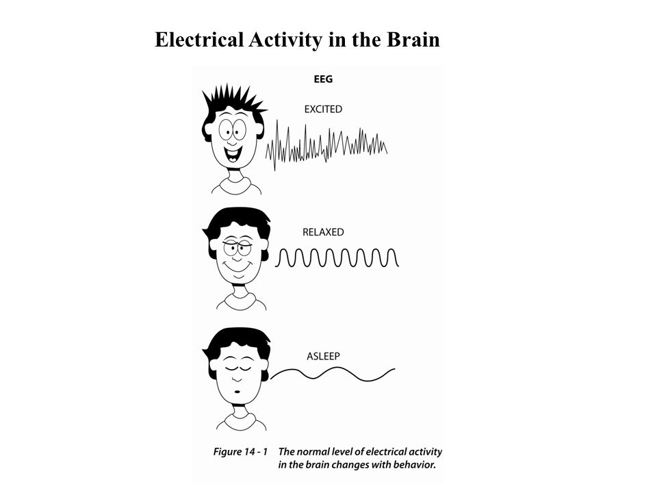 Electrical Activity in the Brain