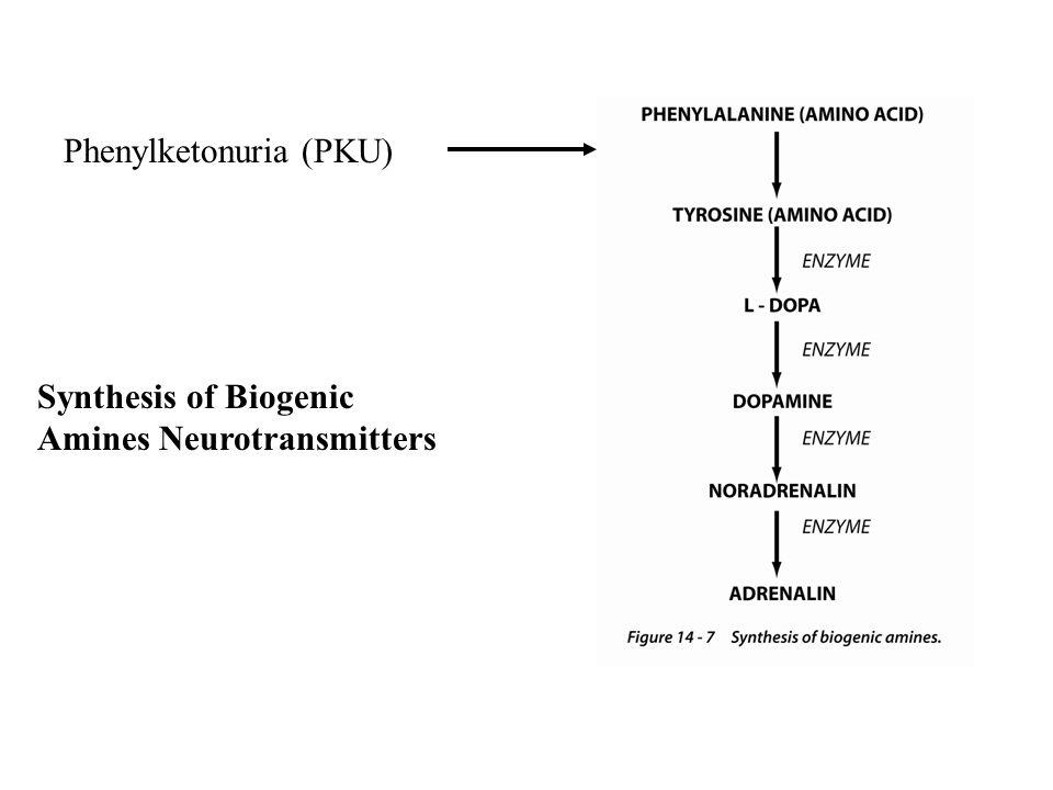Synthesis of Biogenic Amines Neurotransmitters Phenylketonuria (PKU)