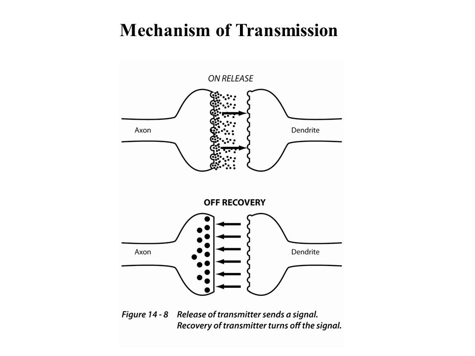 Mechanism of Transmission