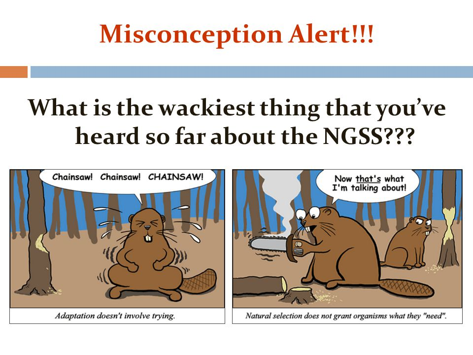 Misconception Alert!!! What is the wackiest thing that you've heard so far about the NGSS