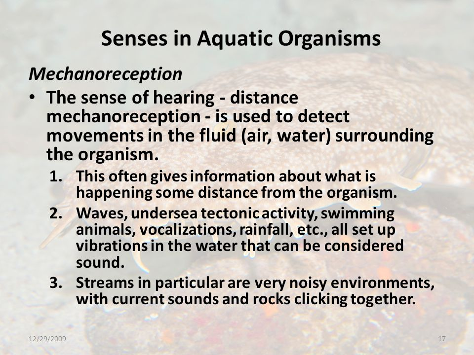 Senses in Aquatic Organisms Mechanoreception The sense of hearing - distance mechanoreception - is used to detect movements in the fluid (air, water) surrounding the organism.