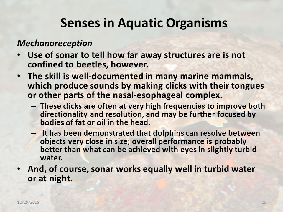 Senses in Aquatic Organisms Mechanoreception Use of sonar to tell how far away structures are is not confined to beetles, however.