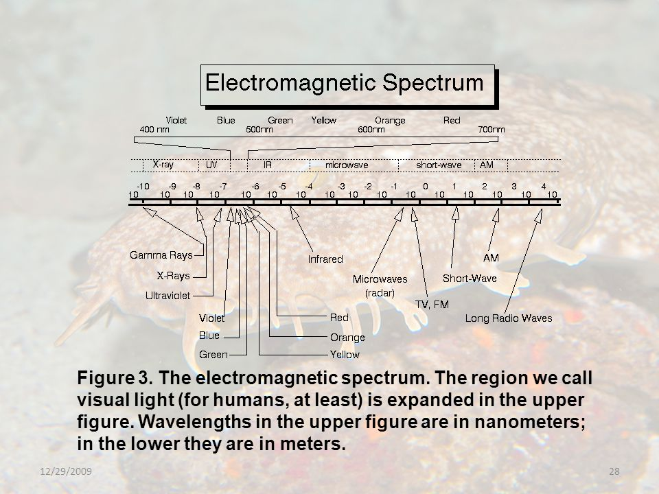 12/29/200928 Figure 3. The electromagnetic spectrum.