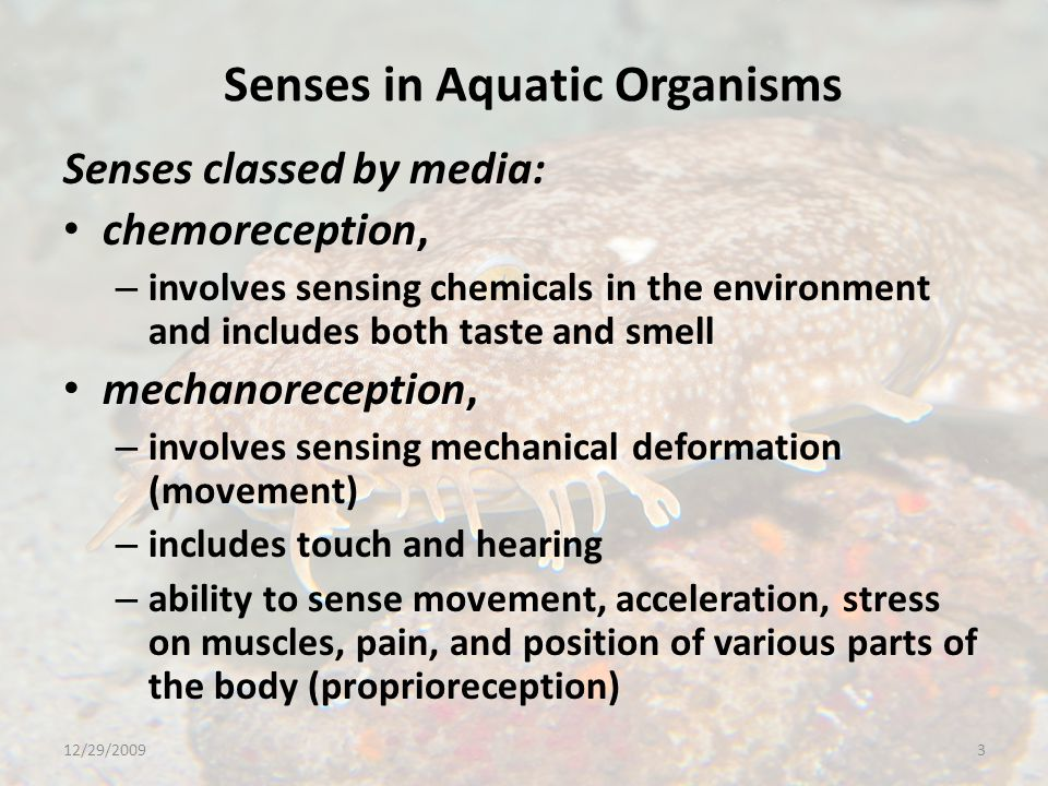 Senses in Aquatic Organisms Senses classed by media: chemoreception, – involves sensing chemicals in the environment and includes both taste and smell mechanoreception, – involves sensing mechanical deformation (movement) – includes touch and hearing – ability to sense movement, acceleration, stress on muscles, pain, and position of various parts of the body (proprioreception) 12/29/20093