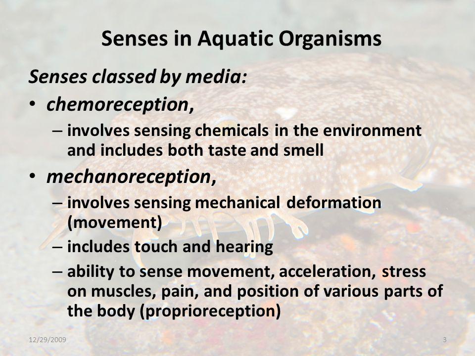 Senses in Aquatic Organisms Mechanoreception The senses of mechanoreception are at least as well developed in aquatic organisms as in terrestrial ones.