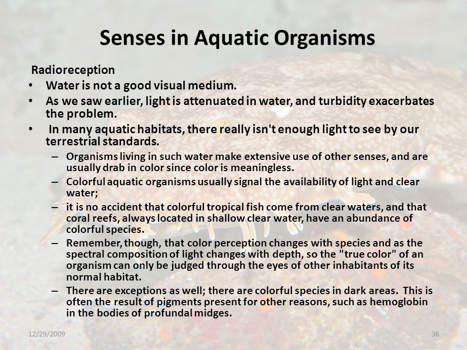 Senses in Aquatic Organisms Radioreception Water is not a good visual medium.