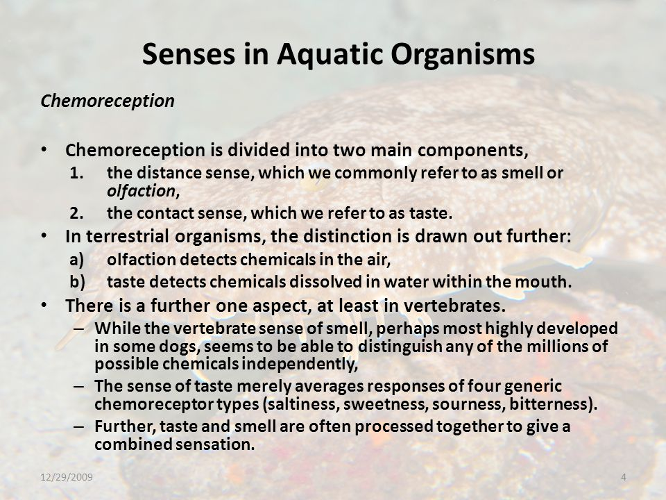 Senses in Aquatic Organisms Mechanoreception Most arthropods use setae, socketed hairs with nerve cells at the base, to detect contact with other structures, wind or water currents, etc.