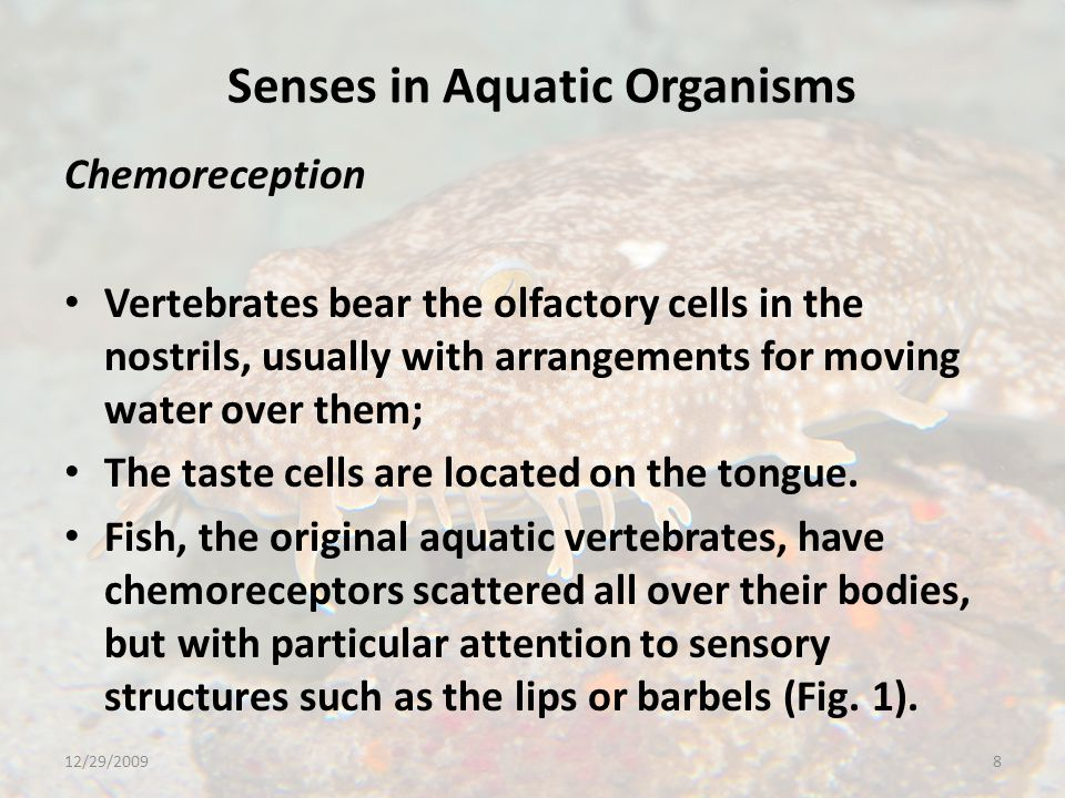 Senses in Aquatic Organisms Mechanoreception Certain organisms, such as whales and a few fish, use sound to communicate, overall the practice does not seem to be as common in the water as it is on land where the air is full of the sounds of animals, particularly birds and insects, communicating.