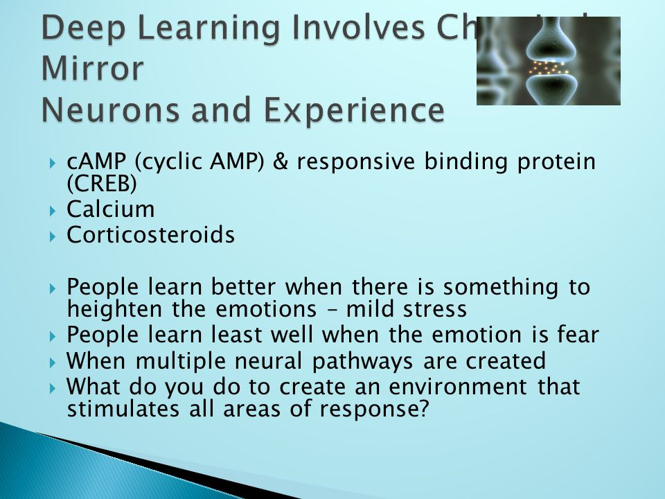  cAMP (cyclic AMP) & responsive binding protein (CREB)  Calcium  Corticosteroids  People learn better when there is something to heighten the emotions – mild stress  People learn least well when the emotion is fear  When multiple neural pathways are created  What do you do to create an environment that stimulates all areas of response?