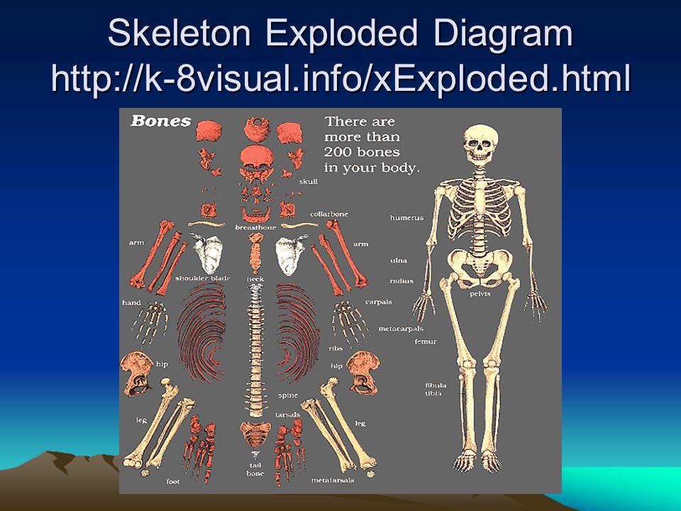 Skeleton Exploded Diagram http://k-8visual.info/xExploded.html