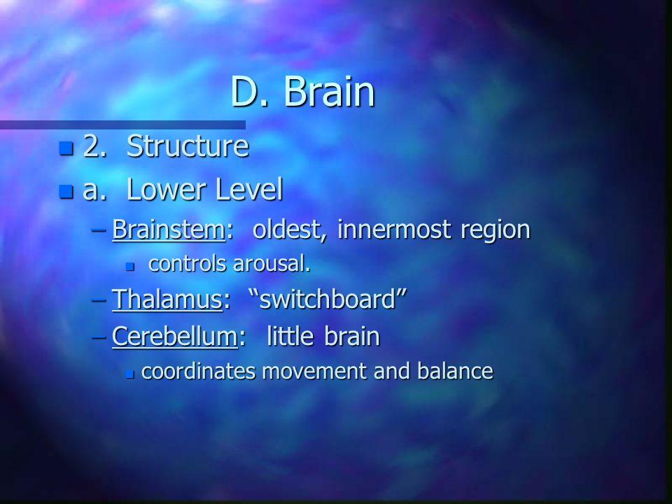 D. Brain n 2. Structure n a. Lower Level –Brainstem: oldest, innermost region n controls arousal.