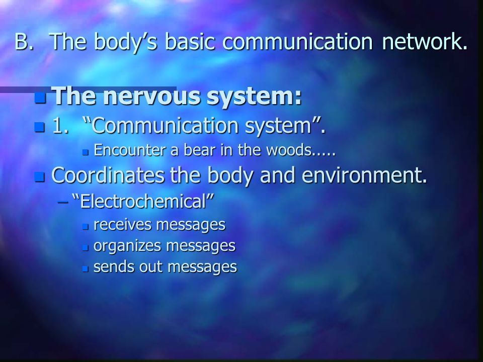 "B. The body's basic communication network. n The nervous system: n 1. ""Communication system"". n Encounter a bear in the woods..... n Coordinates the b"