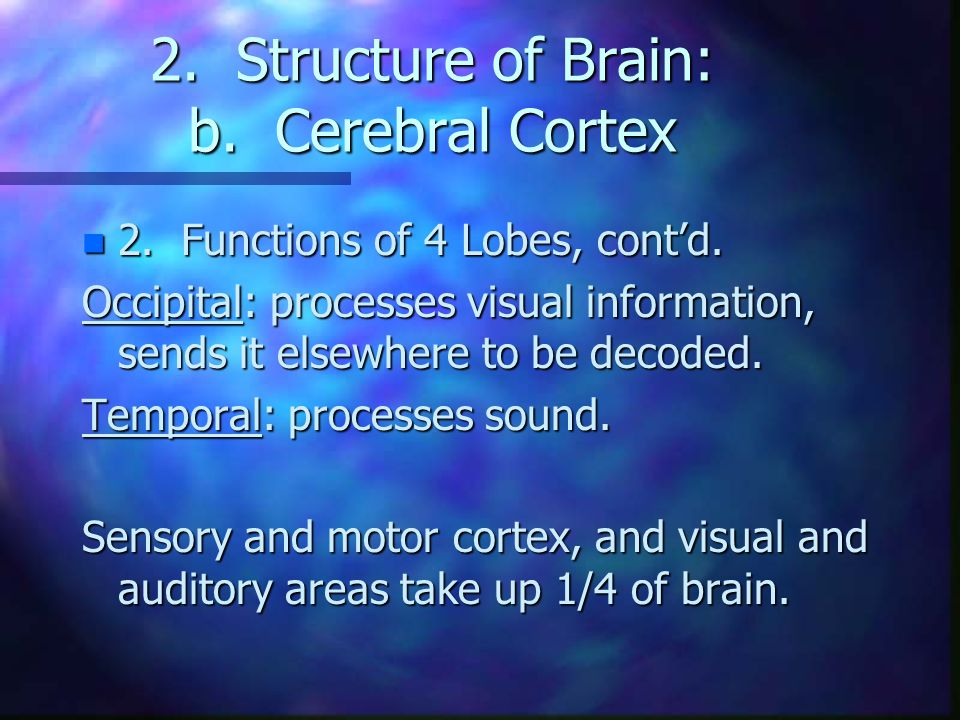 2. Structure of Brain: b. Cerebral Cortex n 2. Functions of 4 Lobes, cont'd. Occipital: processes visual information, sends it elsewhere to be decoded