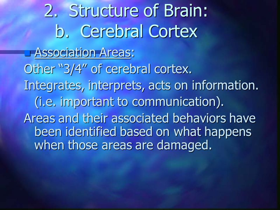 "2. Structure of Brain: b. Cerebral Cortex n Association Areas: Other ""3/4"" of cerebral cortex. Integrates, interprets, acts on information. (i.e. impo"