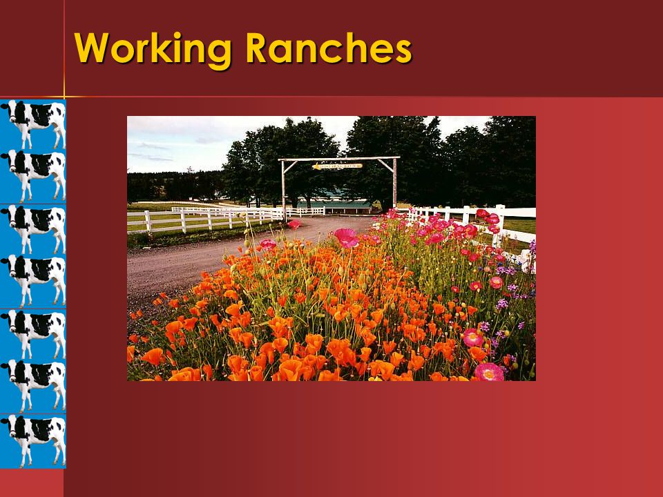 Working Ranches