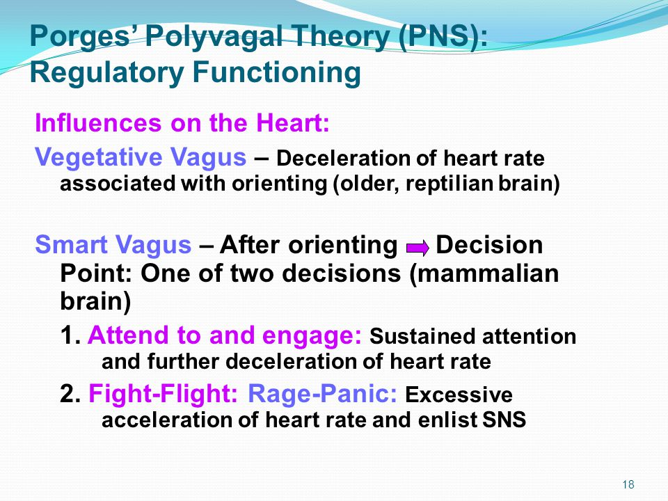 Porges' Polyvagal Theory (PNS): Regulatory Functioning Influences on the Heart: Vegetative Vagus – Deceleration of heart rate associated with orienting (older, reptilian brain) Smart Vagus – After orienting Decision Point: One of two decisions (mammalian brain) 1.
