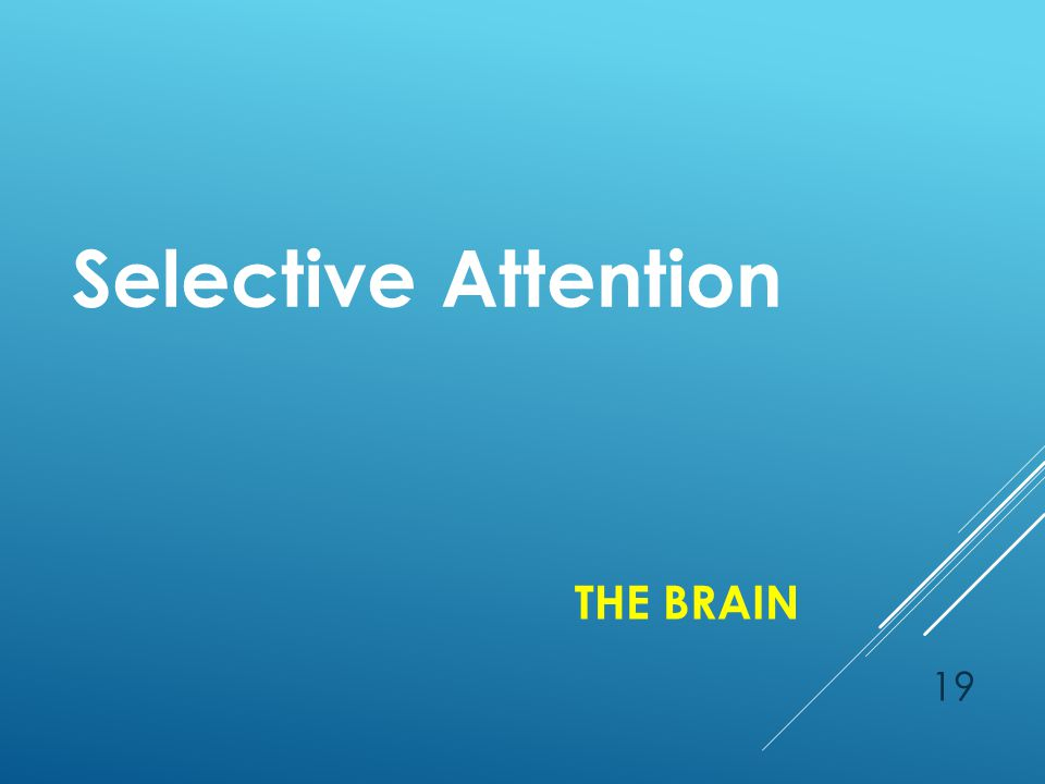 THE BRAIN Selective Attention 19