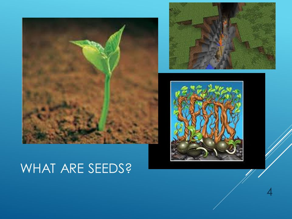 WHAT ARE THE SEEDS? 15
