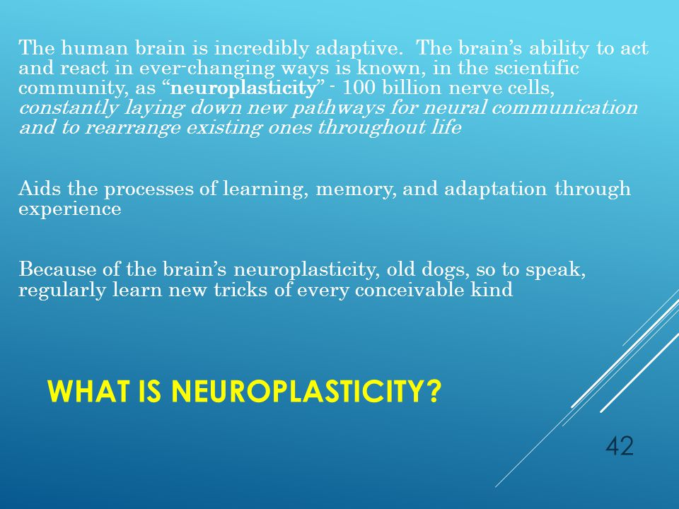 WHAT IS NEUROPLASTICITY. The human brain is incredibly adaptive.