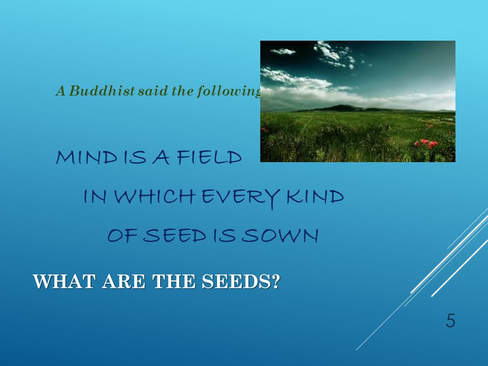 WHAT ARE THE SEEDS? IN US ARE INFINITE VARIETIES OF SEEDS 6