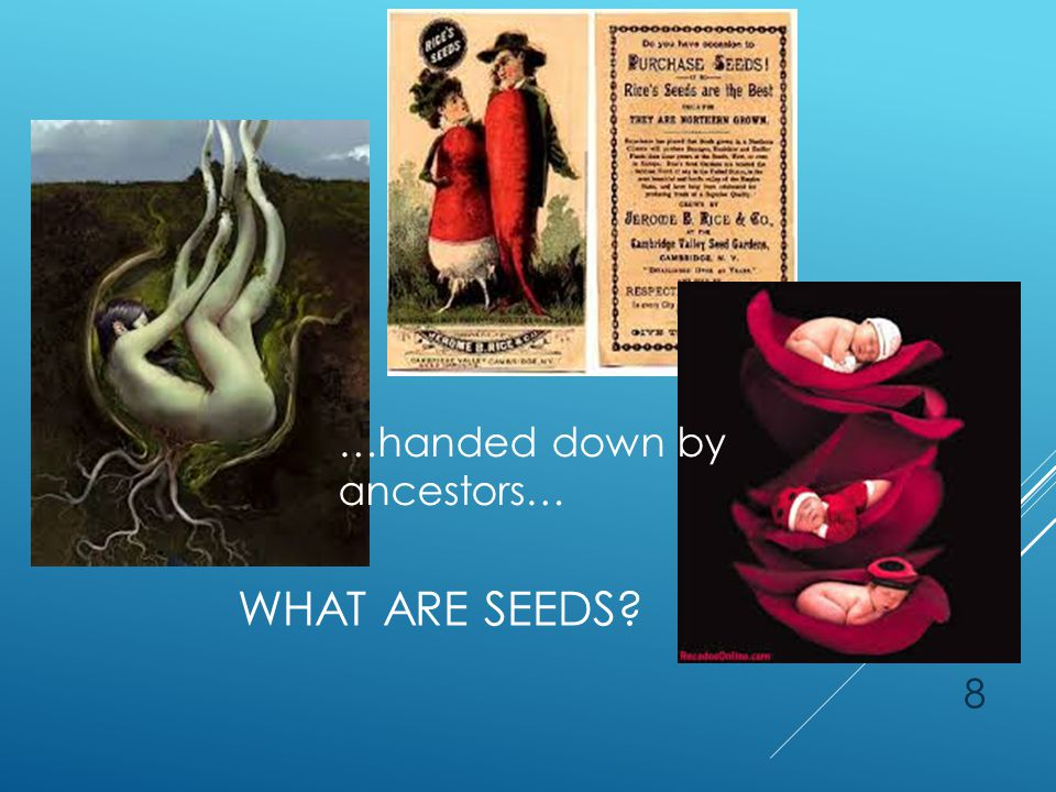 WHAT ARE SEEDS 8 …handed down by ancestors…