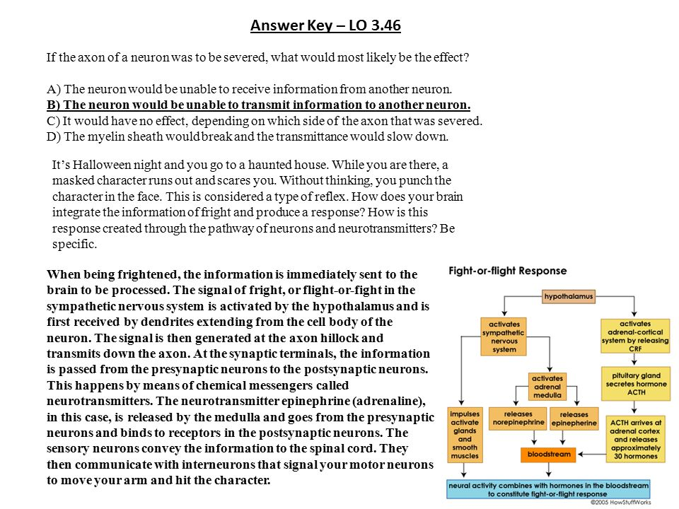 Answer Key – LO 3.46 If the axon of a neuron was to be severed, what would most likely be the effect? A) The neuron would be unable to receive informa